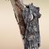 Rudeninis ilgasparniukas - Lithophane consocia | Fotografijos autorius : Arūnas Eismantas | © Macrogamta.lt | Šis tinklapis priklauso bendruomenei kuri domisi makro fotografija ir fotografuoja gyvąjį makro pasaulį.