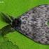 Vienuolis verpikas - Lymantria monacha    Fotografijos autorius : Arūnas Eismantas   © Macrogamta.lt   Šis tinklapis priklauso bendruomenei kuri domisi makro fotografija ir fotografuoja gyvąjį makro pasaulį.