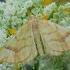 Serbentinis juostasprindis - Eulithis mellinata | Fotografijos autorius : Arūnas Eismantas | © Macrogamta.lt | Šis tinklapis priklauso bendruomenei kuri domisi makro fotografija ir fotografuoja gyvąjį makro pasaulį.