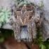 Rudasis rezginuolis - Agalenatea redii    Fotografijos autorius : Arūnas Eismantas   © Macrogamta.lt   Šis tinklapis priklauso bendruomenei kuri domisi makro fotografija ir fotografuoja gyvąjį makro pasaulį.