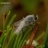 Acrosathe annulata - Pentinuotė   Fotografijos autorius : Romas Ferenca   © Macrogamta.lt   Šis tinklapis priklauso bendruomenei kuri domisi makro fotografija ir fotografuoja gyvąjį makro pasaulį.