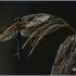 Cordulia aenea - Bronzinė skėtė   Fotografijos autorius : Valdimantas Grigonis   © Macrogamta.lt   Šis tinklapis priklauso bendruomenei kuri domisi makro fotografija ir fotografuoja gyvąjį makro pasaulį.