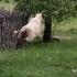 Net skraidančių avių radom ...    Fotografijos autorius : Valdimantas Grigonis   © Macrogamta.lt   Šis tinklapis priklauso bendruomenei kuri domisi makro fotografija ir fotografuoja gyvąjį makro pasaulį.