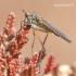 Empididae - Snapmusė | Fotografijos autorius : Gediminas Gražulevičius | © Macrogamta.lt | Šis tinklapis priklauso bendruomenei kuri domisi makro fotografija ir fotografuoja gyvąjį makro pasaulį.