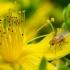 Musė ??? | Fotografijos autorius : Oskaras Venckus | © Macrogamta.lt | Šis tinklapis priklauso bendruomenei kuri domisi makro fotografija ir fotografuoja gyvąjį makro pasaulį.