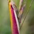 Liucerninis siaurasparnis ugniukas - Oncocera semirubella   Fotografijos autorius : Oskaras Venckus   © Macrogamta.lt   Šis tinklapis priklauso bendruomenei kuri domisi makro fotografija ir fotografuoja gyvąjį makro pasaulį.