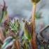 Gausialapis lubinas - Lupinus polyphyllus | Fotografijos autorius : Oskaras Venckus | © Macrogamta.lt | Šis tinklapis priklauso bendruomenei kuri domisi makro fotografija ir fotografuoja gyvąjį makro pasaulį.
