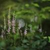 Šilinis viržis - Calluna vulgaris   Fotografijos autorius : Vidas Brazauskas   © Macrogamta.lt   Šis tinklapis priklauso bendruomenei kuri domisi makro fotografija ir fotografuoja gyvąjį makro pasaulį.