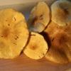 Geltonasis baltikas - Tricholoma sulphureum | Fotografijos autorius : Ramunė Vakarė | © Macrogamta.lt | Šis tinklapis priklauso bendruomenei kuri domisi makro fotografija ir fotografuoja gyvąjį makro pasaulį.