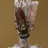 Žiedmusė - Pipizella viduata ♂ | Fotografijos autorius : Žilvinas Pūtys | © Macrogamta.lt | Šis tinklapis priklauso bendruomenei kuri domisi makro fotografija ir fotografuoja gyvąjį makro pasaulį.