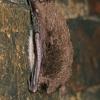 Žiemojantys vandeniniai pelėausiai | Fotografijos autorius : Gintautas Steiblys | © Macrogamta.lt | Šis tinklapis priklauso bendruomenei kuri domisi makro fotografija ir fotografuoja gyvąjį makro pasaulį.