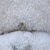 Grybas - ? | Fotografijos autorius : Žilvinas Pūtys | © Macrogamta.lt | Šis tinklapis priklauso bendruomenei kuri domisi makro fotografija ir fotografuoja gyvąjį makro pasaulį.