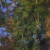 Standžialapė kurklė - Batrachium circinatum   Fotografijos autorius : Kęstutis Obelevičius   © Macrogamta.lt   Šis tinklapis priklauso bendruomenei kuri domisi makro fotografija ir fotografuoja gyvąjį makro pasaulį.