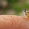 Šviesialūpės dryžės - Cepaea hortensis jauniklis | Fotografijos autorius : Rasa Gražulevičiūtė | © Macrogamta.lt | Šis tinklapis priklauso bendruomenei kuri domisi makro fotografija ir fotografuoja gyvąjį makro pasaulį.