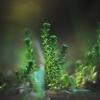 Aitrusis šilokas - Sedum acre   Fotografijos autorius : Vidas Brazauskas   © Macrogamta.lt   Šis tinklapis priklauso bendruomenei kuri domisi makro fotografija ir fotografuoja gyvąjį makro pasaulį.