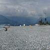 Batumio papludimys.. | Fotografijos autorius : Gintautas Steiblys | © Macrogamta.lt | Šis tinklapis priklauso bendruomenei kuri domisi makro fotografija ir fotografuoja gyvąjį makro pasaulį.