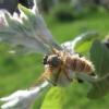 Grybas - Entomophthora muscae | Fotografijos autorius : Agnė Kulpytė | © Macrogamta.lt | Šis tinklapis priklauso bendruomenei kuri domisi makro fotografija ir fotografuoja gyvąjį makro pasaulį.