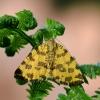 Leopardinis sprindžius - Pseudopanthera macularia   Fotografijos autorius : Arūnas Eismantas   © Macrogamta.lt   Šis tinklapis priklauso bendruomenei kuri domisi makro fotografija ir fotografuoja gyvąjį makro pasaulį.