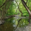 Marvelės upelis | Fotografijos autorius : Gintautas Steiblys | © Macrogamta.lt | Šis tinklapis priklauso bendruomenei kuri domisi makro fotografija ir fotografuoja gyvąjį makro pasaulį.