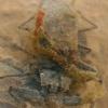 Pilkosios skorpionblakės - Nepa cinerea   Fotografijos autorius : Gintautas Steiblys   © Macrogamta.lt   Šis tinklapis priklauso bendruomenei kuri domisi makro fotografija ir fotografuoja gyvąjį makro pasaulį.