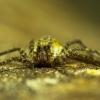 voras | Fotografijos autorius : Irenėjas Urbonavičius | © Macrogamta.lt | Šis tinklapis priklauso bendruomenei kuri domisi makro fotografija ir fotografuoja gyvąjį makro pasaulį.