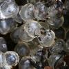 Juosvojo šliužo (Limax cinereoniger) kiaušinėliai   Fotografijos autorius : Gintautas Steiblys   © Macrogamta.lt   Šis tinklapis priklauso bendruomenei kuri domisi makro fotografija ir fotografuoja gyvąjį makro pasaulį.