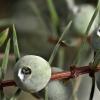 Paprastojo kadagio uogos - Juniperus communis | Fotografijos autorius : Darius Baužys | © Macrogamta.lt | Šis tinklapis priklauso bendruomenei kuri domisi makro fotografija ir fotografuoja gyvąjį makro pasaulį.