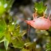 Erkutė - Bdellidae   Fotografijos autorius : Oskaras Venckus   © Macrogamta.lt   Šis tinklapis priklauso bendruomenei kuri domisi makro fotografija ir fotografuoja gyvąjį makro pasaulį.