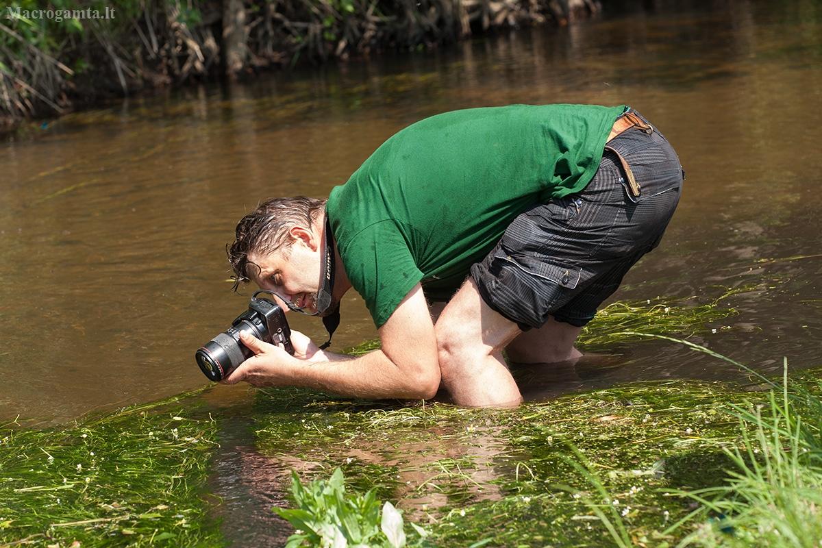 Gaujos upėje   Fotografijos autorius : Žilvinas Pūtys   © Macrogamta.lt   Šis tinklapis priklauso bendruomenei kuri domisi makro fotografija ir fotografuoja gyvąjį makro pasaulį.