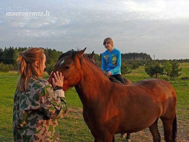 Merginos ir arkliai   Fotografijos autorius : Darius Baužys   © Macrogamta.lt   Šis tinklapis priklauso bendruomenei kuri domisi makro fotografija ir fotografuoja gyvąjį makro pasaulį.