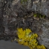 Dissoleucas niveirostris | Fotografijos autorius : Giedrius Markevičius | © Macrogamta.lt | Šis tinklapis priklauso bendruomenei kuri domisi makro fotografija ir fotografuoja gyvąjį makro pasaulį.