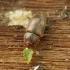 Žvilgvabalis - Epuraea sp.   Fotografijos autorius : Vidas Brazauskas   © Macrogamta.lt   Šis tinklapis priklauso bendruomenei kuri domisi makro fotografija ir fotografuoja gyvąjį makro pasaulį.