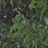 Gebenė lipikė - Hedera helix   Fotografijos autorius : Kęstutis Obelevičius   © Macrogamta.lt   Šis tinklapis priklauso bendruomenei kuri domisi makro fotografija ir fotografuoja gyvąjį makro pasaulį.