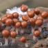 Apgaulusis krekenis - Trichia decipiens | Fotografijos autorius : Gintautas Steiblys | © Macrogamta.lt | Šis tinklapis priklauso bendruomenei kuri domisi makro fotografija ir fotografuoja gyvąjį makro pasaulį.