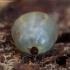Miškinė erkė - Ixodes ricinus   Fotografijos autorius : Žilvinas Pūtys   © Macrogamta.lt   Šis tinklapis priklauso bendruomenei kuri domisi makro fotografija ir fotografuoja gyvąjį makro pasaulį.