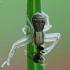 Paprastasis krabvoris - Xysticus cristatus ? | Fotografijos autorius : Vidas Brazauskas | © Macrogamta.lt | Šis tinklapis priklauso bendruomenei kuri domisi makro fotografija ir fotografuoja gyvąjį makro pasaulį.