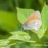 Tamsusis satyriukas (Coenonympha glycerion)   Fotografijos autorius : Aleksandras Naryškin   © Macrogamta.lt   Šis tinklapis priklauso bendruomenei kuri domisi makro fotografija ir fotografuoja gyvąjį makro pasaulį.
