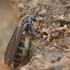 Grybinis uodelis  | Fotografijos autorius : Gintautas Steiblys | © Macrogamta.lt | Šis tinklapis priklauso bendruomenei kuri domisi makro fotografija ir fotografuoja gyvąjį makro pasaulį.
