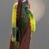 Vilkdalgių ėdikas  | Fotografijos autorius : Agnė Našlėnienė | © Macrogamta.lt | Šis tinklapis priklauso bendruomenei kuri domisi makro fotografija ir fotografuoja gyvąjį makro pasaulį.