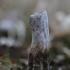 Lycoperdon excipuliforme | Fotografijos autorius : Agnė Našlėnienė | © Macrogamta.lt | Šis tinklapis priklauso bendruomenei kuri domisi makro fotografija ir fotografuoja gyvąjį makro pasaulį.