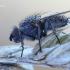 Leucophora obtusa - Žiedenė | Fotografijos autorius : Arūnas Eismantas | © Macrogamta.lt | Šis tinklapis priklauso bendruomenei kuri domisi makro fotografija ir fotografuoja gyvąjį makro pasaulį.
