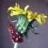 Geltonmargė meškutė - Hyphoraia aulica | Fotografijos autorius : Giedrius Švitra | © Macrogamta.lt | Šis tinklapis priklauso bendruomenei kuri domisi makro fotografija ir fotografuoja gyvąjį makro pasaulį.