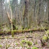 Biržų  giria | Fotografijos autorius : Vytautas Tamutis | © Macrogamta.lt | Šis tinklapis priklauso bendruomenei kuri domisi makro fotografija ir fotografuoja gyvąjį makro pasaulį.