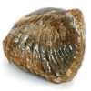 Juros periodo fosilija - pečiakojis (Brachiopoda) | Fotografijos autorius : Gintautas Steiblys | © Macrogamta.lt | Šis tinklapis priklauso bendruomenei kuri domisi makro fotografija ir fotografuoja gyvąjį makro pasaulį.